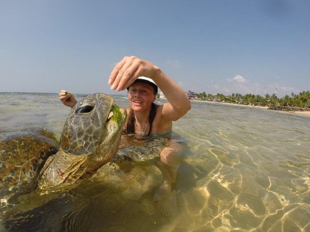 Покормить черепах