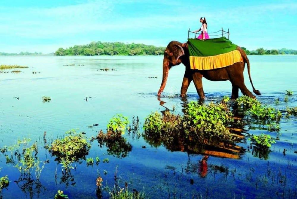 Новогодние туры на Шри-Ланку