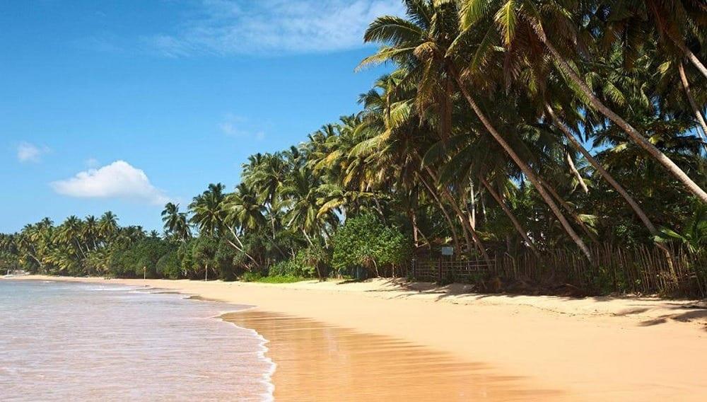 поехать на Цейлон