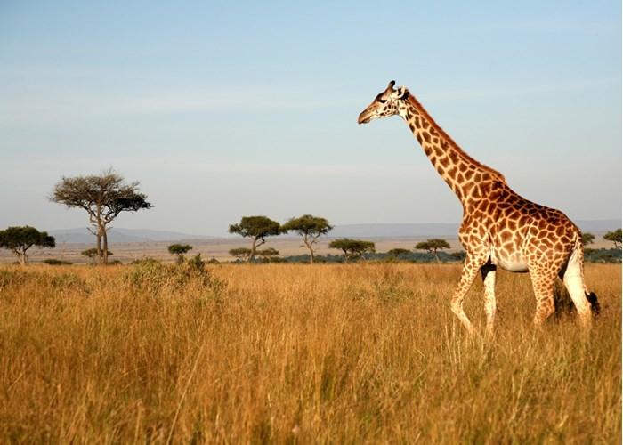 Незабываемые курорты Африки 2