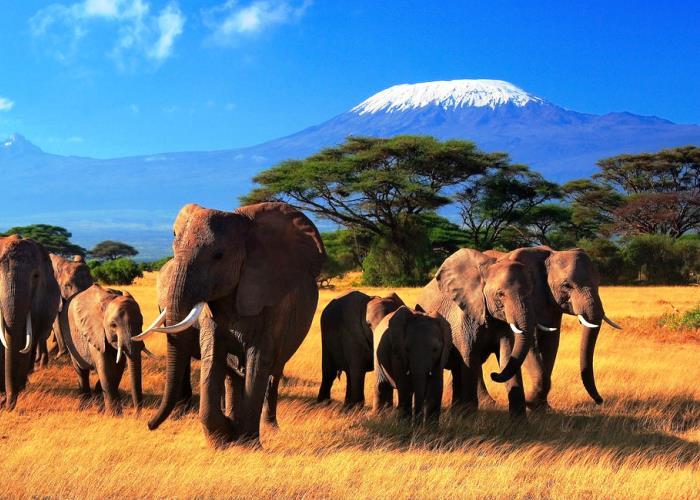 Туры в Кению на Новый Год 5