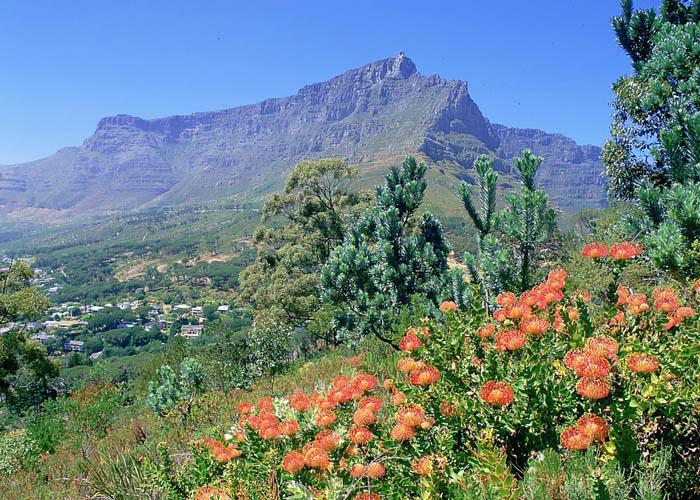 Курорты южной Африки особенности 4