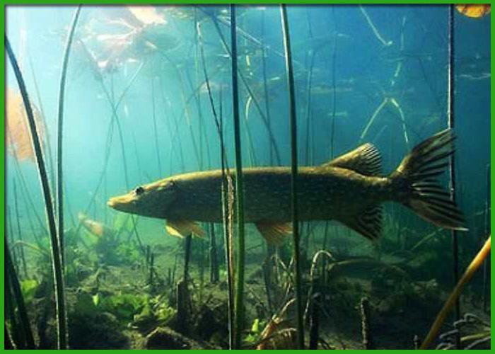 Подводная охота 2