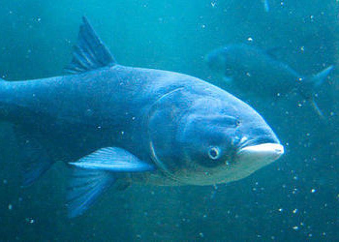 Подводная охота 5