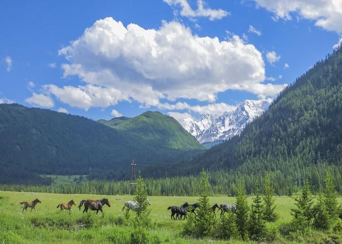 Путешествие по Алтаю и другим курортных зонам 2