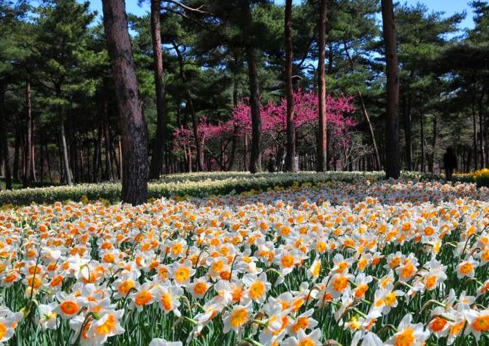 Hitachi National Park 2