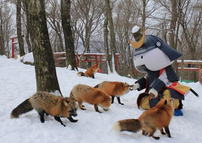 The village of foxes 4