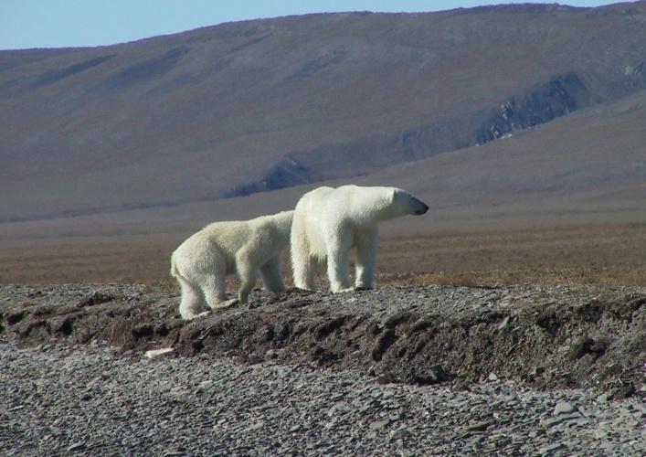 Wrangel Island 2