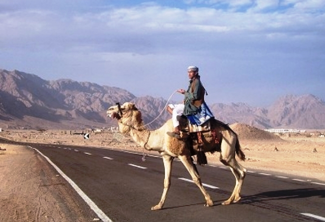 The road from Hurghada to Luxor is the most dangerous road in the world 3