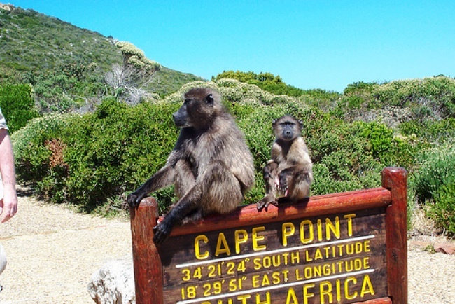 Cape Agulhas and Cape Point the merging of two oceans 2