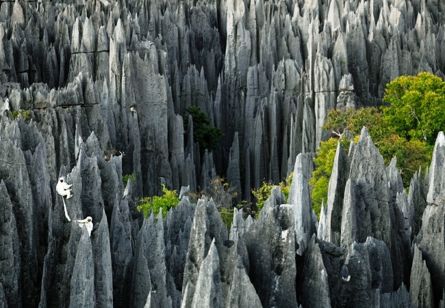 Stone Forest. See with your own eyes 4