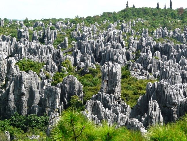 Stone Forest. See with your own eyes 5