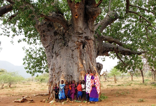 Funny and majestic Baobab 5
