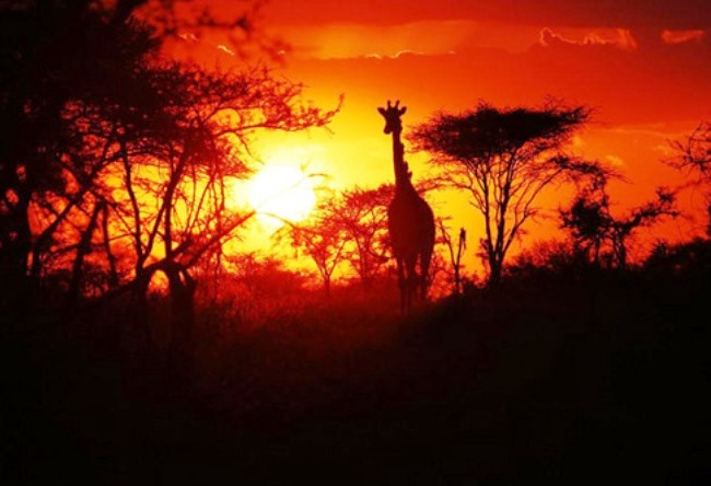 Jurassic Park Serengeti 2