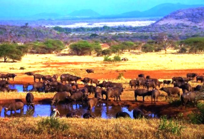 Jurassic Park Serengeti 3