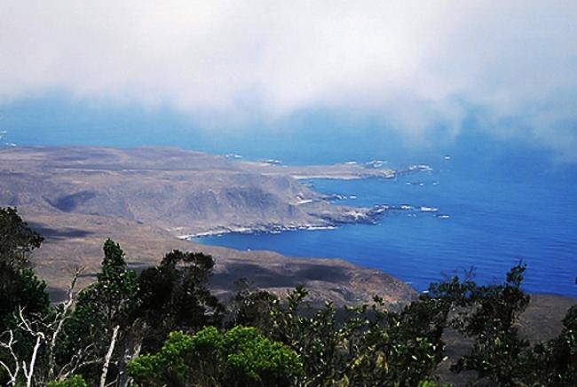 Биосфера Фрая Хорхе в Чили – оазис посреди пустоши