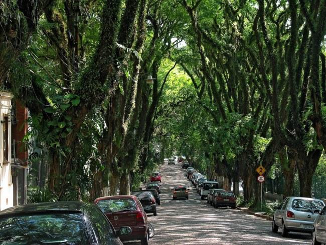 1464.ам. Самая зеленая улица  Гонсалу ди Ковалью 2