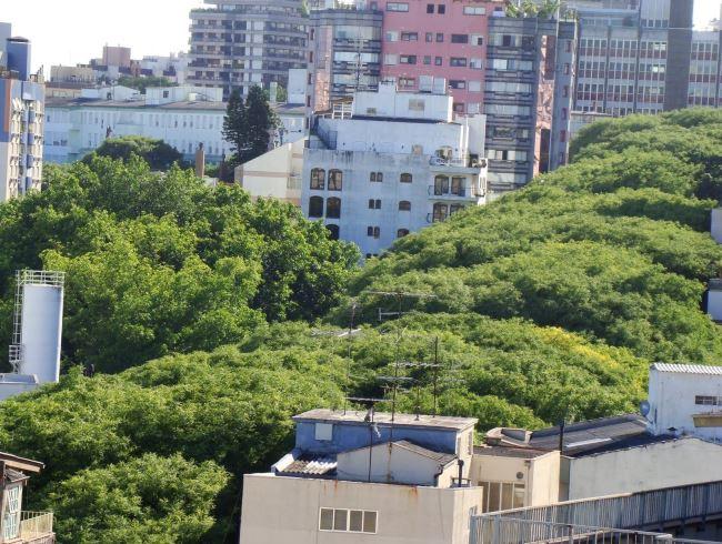 1464.ам. Самая зеленая улица  Гонсалу ди Ковалью 3