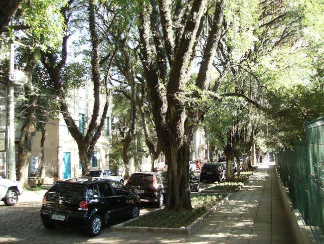 1464.ам. Самая зеленая улица  Гонсалу ди Ковалью 4