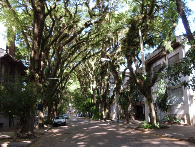 1464.ам. Самая зеленая улица  Гонсалу ди Ковалью 5