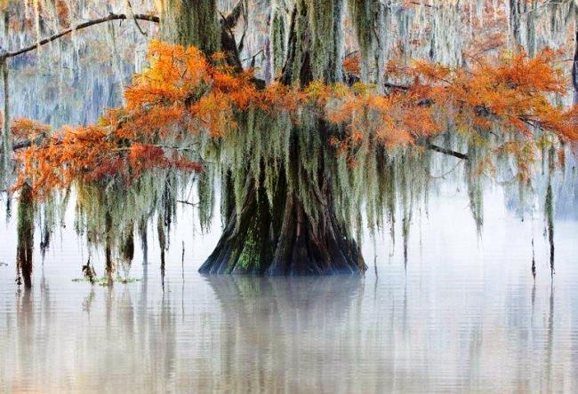Кипарисовый лес в Техасе 2