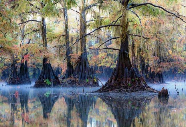 Кипарисовый лес в Техасе 3