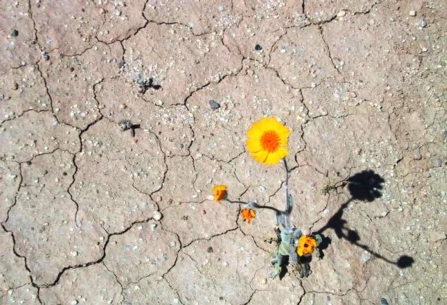 Самая сухая пустыня на планете  Атакама 2 1495.ам