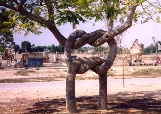 Цирк деревьев Эрландсена