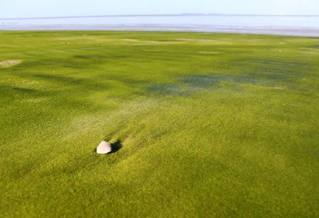 Пляж с зеленым песком  Папаколеа 5