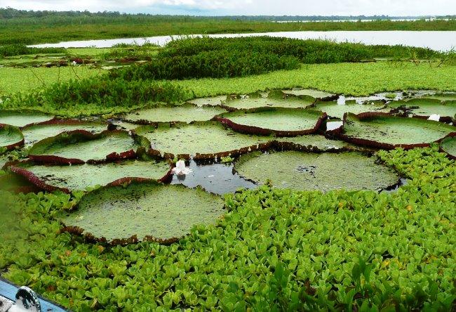 Икитос  город в дебрях Амазонки 5