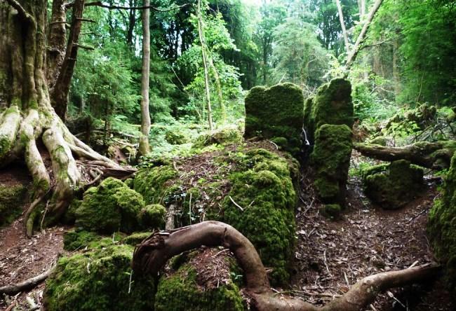 Пазвулдский лес