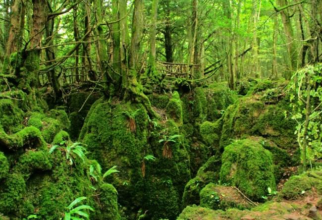Пазвулдский лес 3