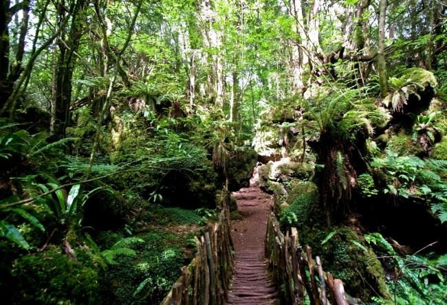 Пазвулдский лес 4