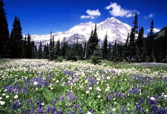 The top of Mount Washington 2
