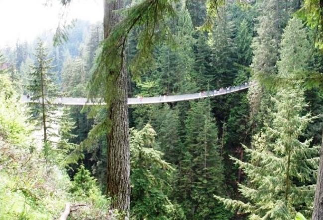 Capilano Bridge in British Columbia 4