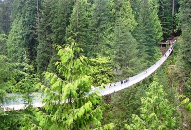 Capilano Bridge in British Columbia 5