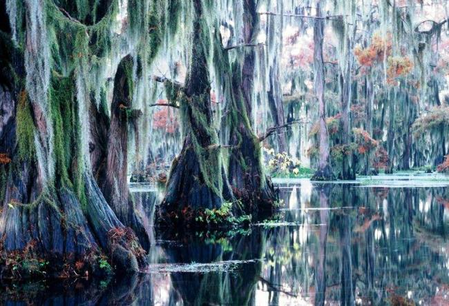 Cypress forest in Texas 5