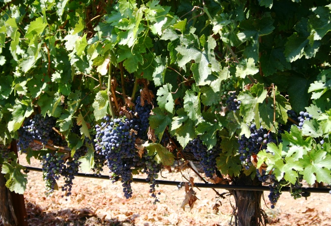 Wine tourism in California 2