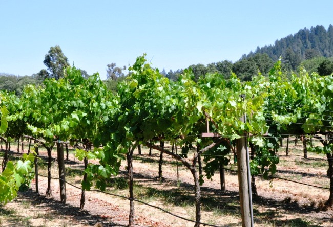 Wine tourism in California 4