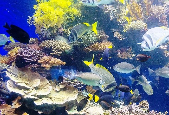 Морской аквариум Акабы 3