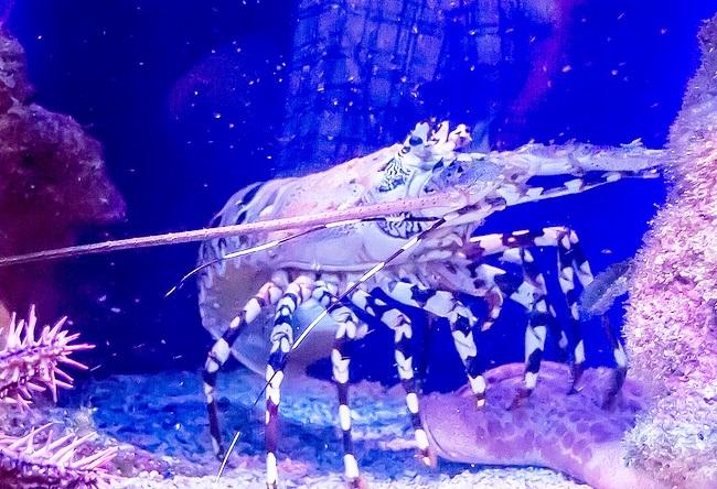 Морской аквариум Акабы 4