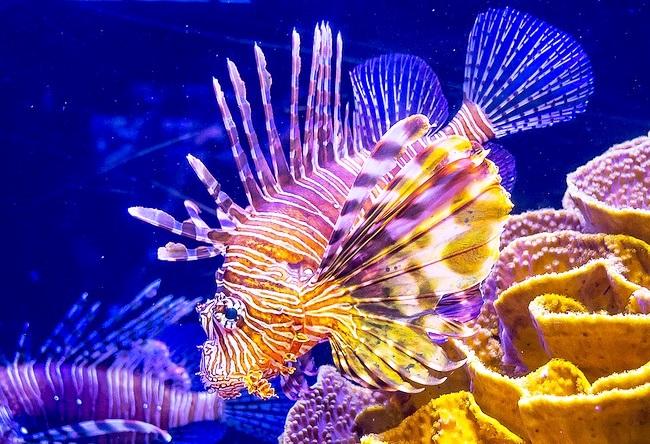 Морской аквариум Акабы 5
