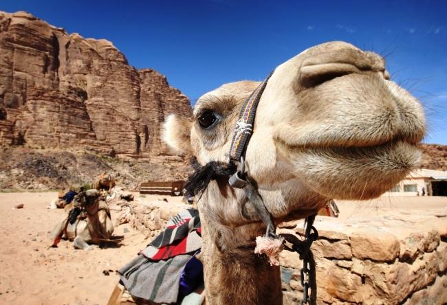 Каменный оазис посередине Аравийской пустыни 6