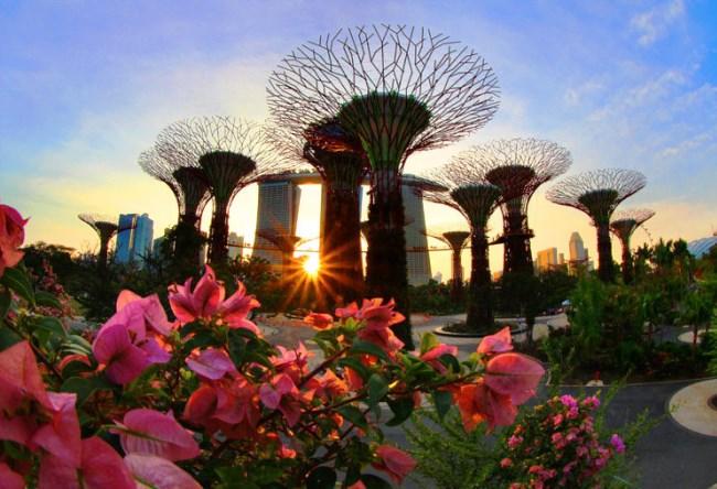 1456.аз. Bay South в Сингапуре 5