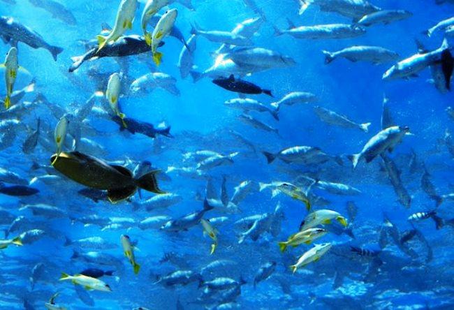 1462.аз.Подводный ресторан Итхаа 2