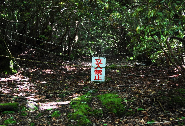 Лес самоубийц у подножия Фудзи
