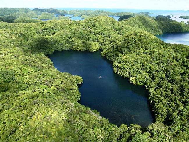 Озеро медуз в Палау 2