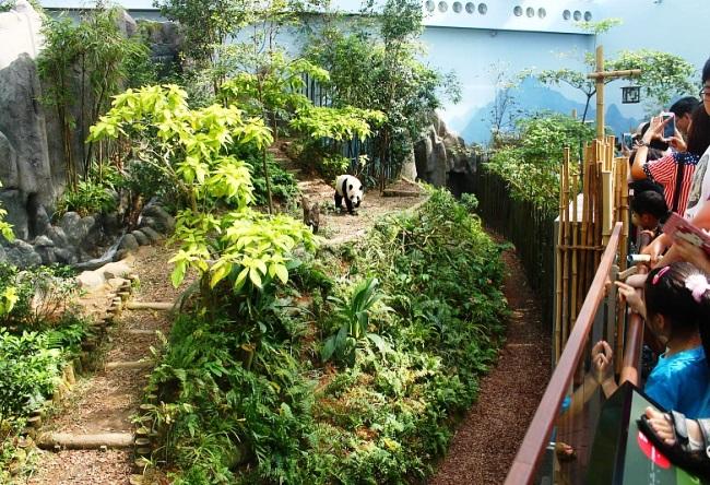 Сингапур Речное Сафари 2