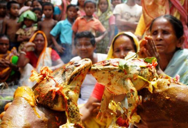 Индийские свадьбы лягушек 5