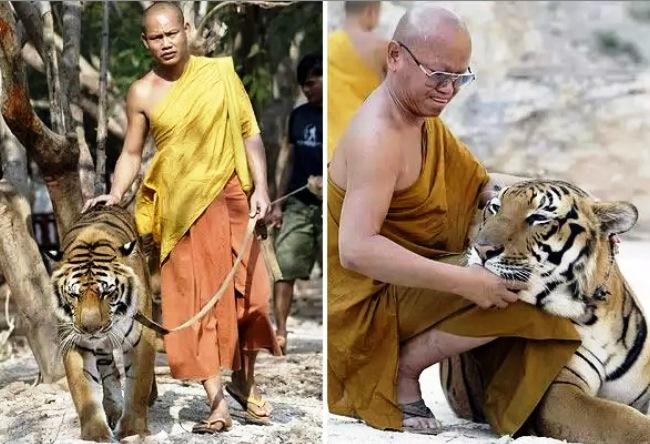 Монастырь Ват Па - так и превратился храм в зверинец…
